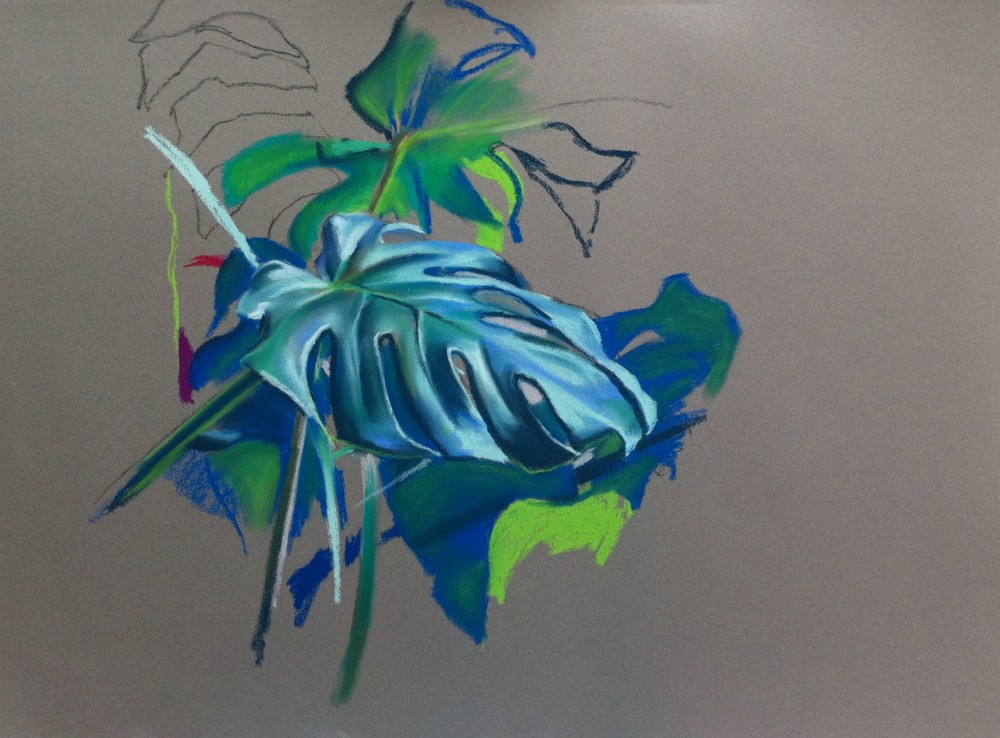 Pastel colour drawing of Swiss cheese plant leaf